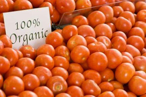 Tomates orgânicos