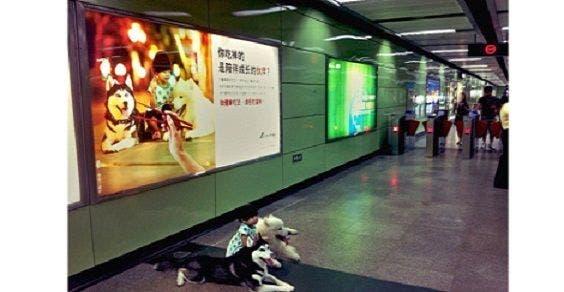 manifesto de Animal Asia nas cidades da China