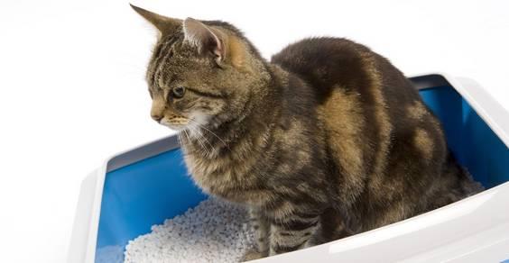 limpar e esterilizar a caixa de areia do gato