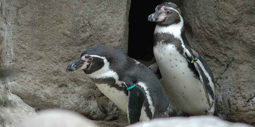 Turismo na Antártida põe meio ambiente em risco