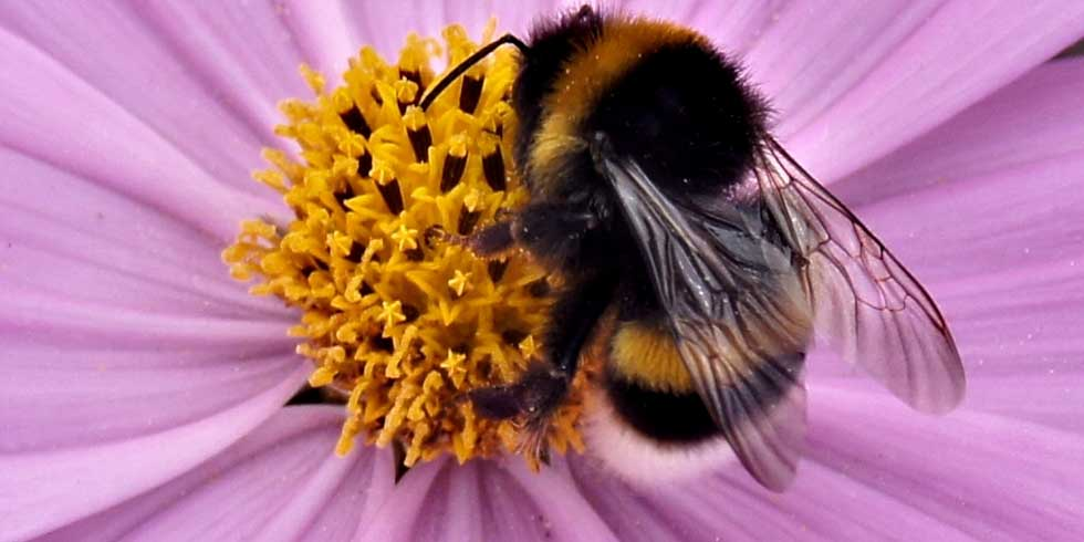 desaparecimento das abelhas