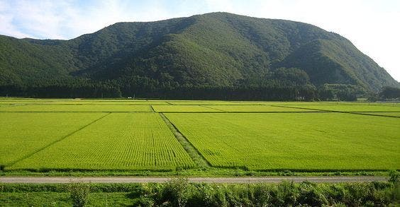 Como fazer renascer a agricultura em Fukushima