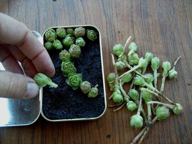 Micro jardim