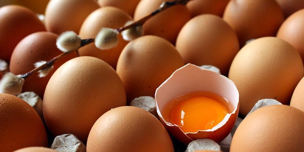 ovos orgânicos e convencionais