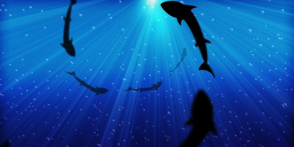 FAO continua sua luta na preservação do peixe