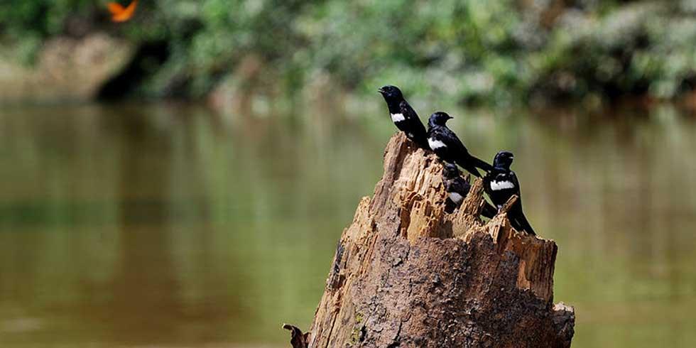Exploração de petróleo ameaça o Parque nacional Yasuní