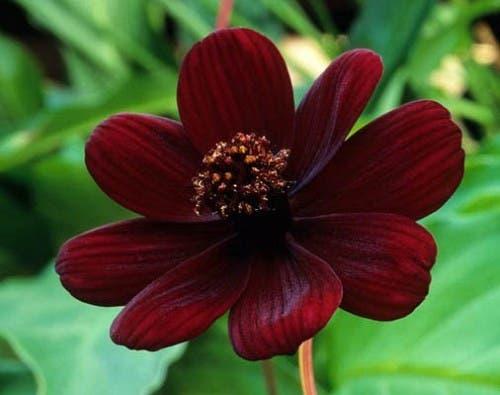 Flores perfumadas