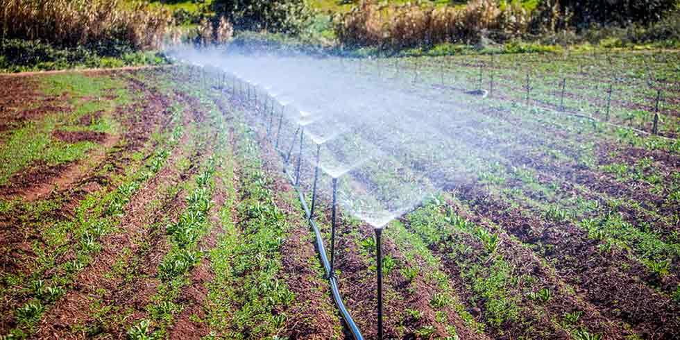 A batalha pela economia de água na indústria de alimentos