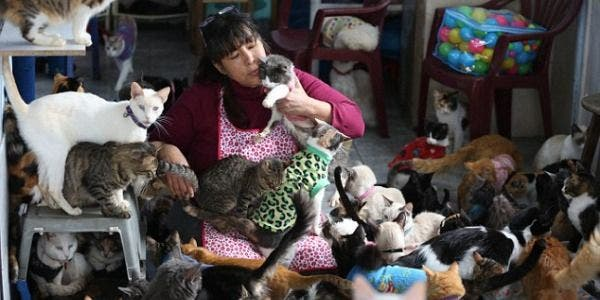 enfermeira que cuida de gatos doentes em sua própria casa