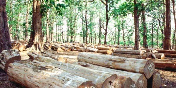 2030 stop ao desmatamento?