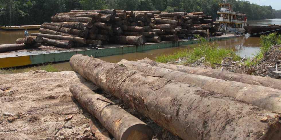 Ativistas usam GPS para rastrear madeira ilegal na Amazônia
