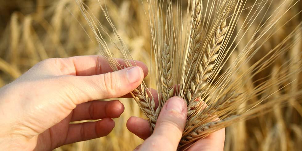 Tecnologia + agricultura = segurança alimentar mundial