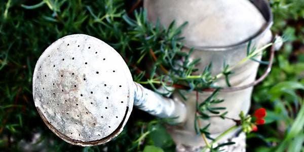 ferramentas básicas e úteis para a jardinagem