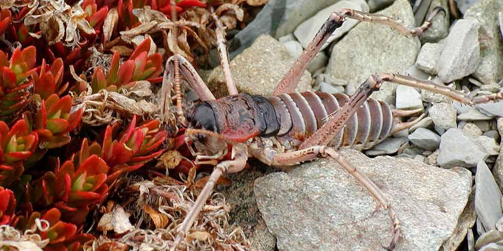 o maior inseto e o menor vertebrado do planeta