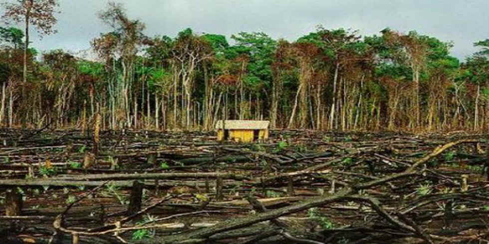 Lista do Desmatamento Ilegal