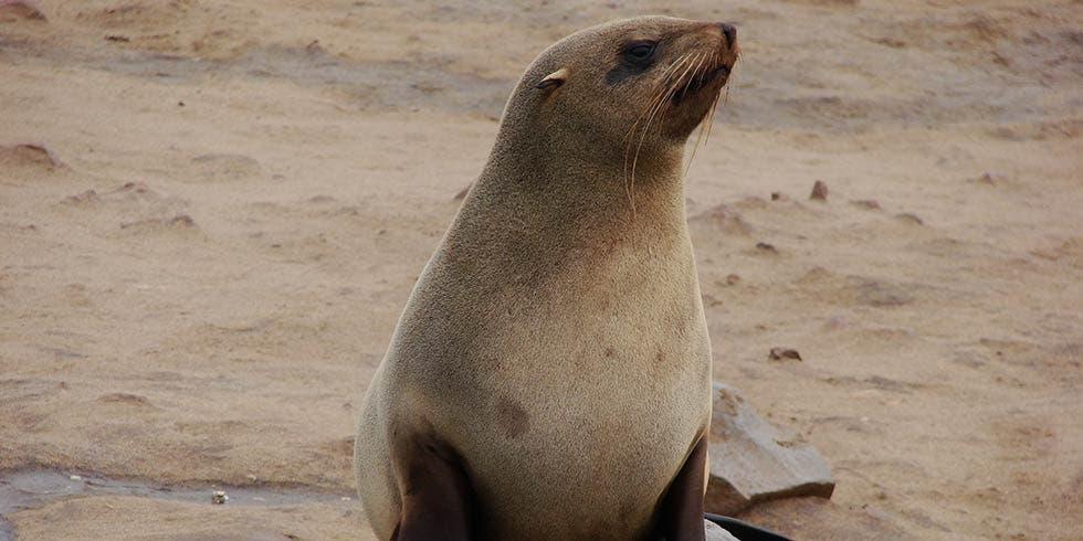 caso do estupro de pinguins por focas, na Antártida