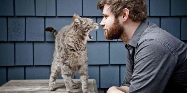 Gatos e homens