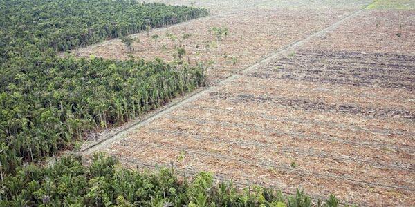 desmatamento aumenta mais de 400% em novembro de 2014