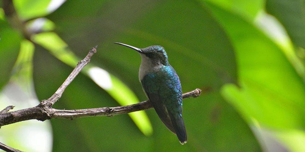 122 Espécies de pássaros colombianos estão sob risco de extinção