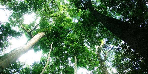 Desmatamento tropical
