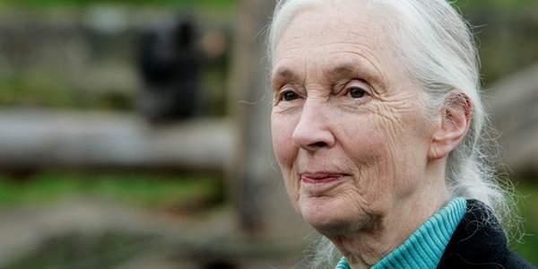 previsões catastróficas de Jane Goodall
