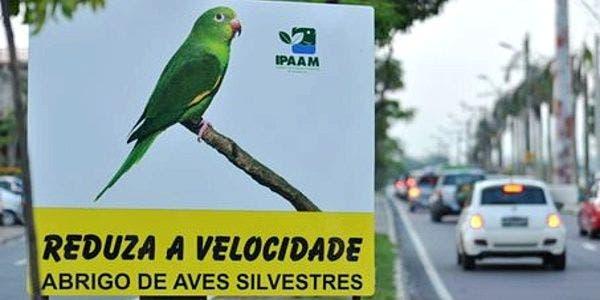 placas de alerta na Avenida onde foram encontrados mortos cerca de 250 periquitos em Manaus