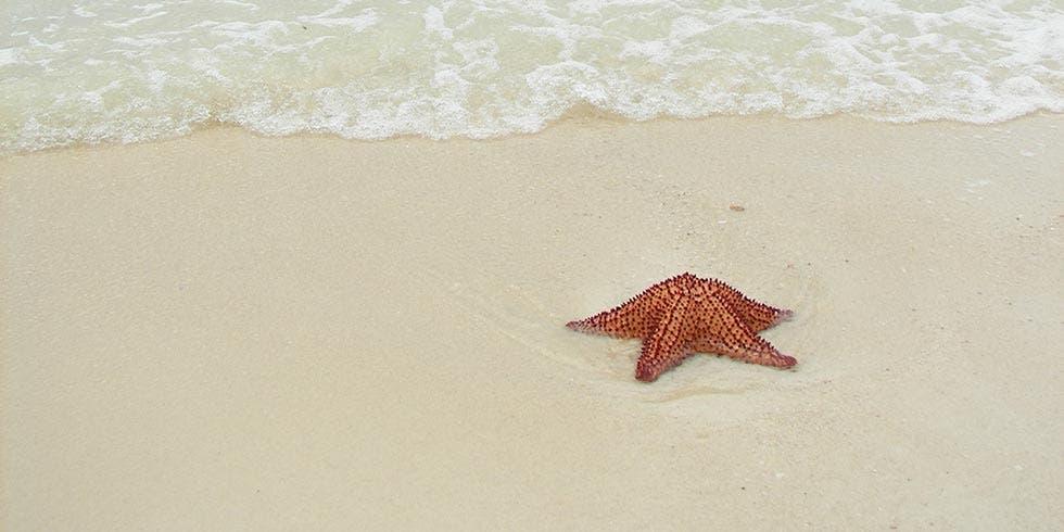 Estrelas-do-mar em risco
