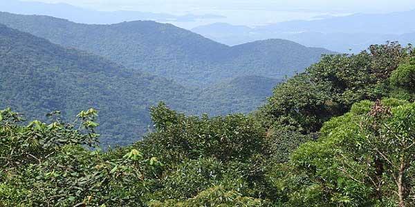 florestas tropicais absorvem mais dióxido de carbono