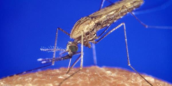 Malária novo tratamento