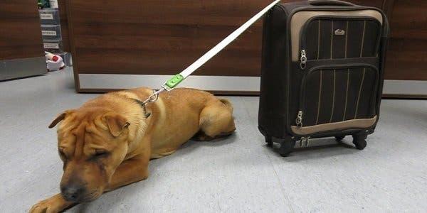 cão abandonado com sua mala de viagem
