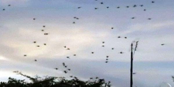 'Chuva de aranhas'