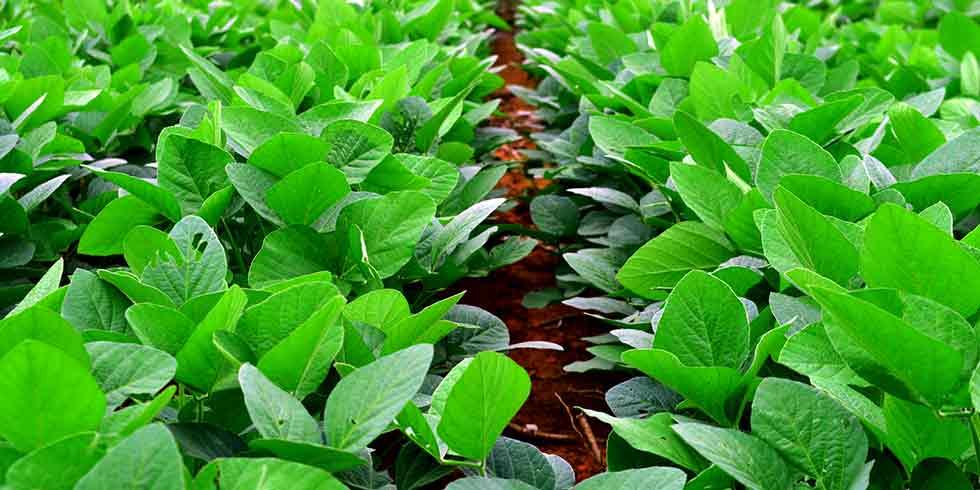 Moratória da Soja é eficaz contra desmatamento