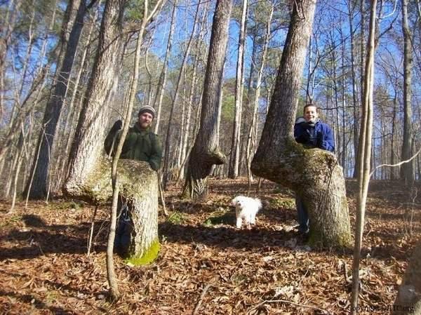Trail Marker Trees 1