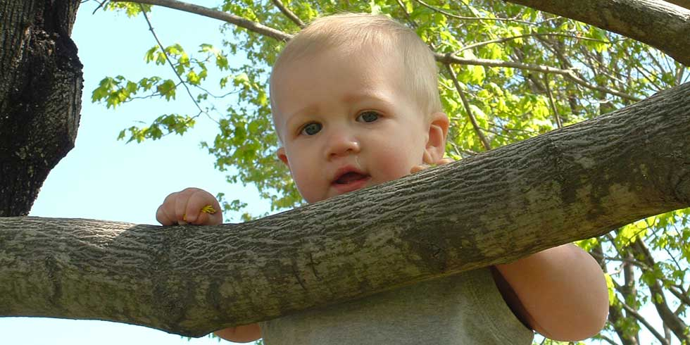 Plantar uma árvore para cada bebê que nasce