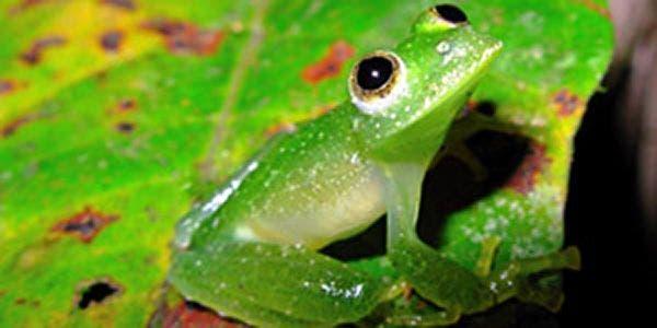 Projeto de Lei que facilita exploração da biodiversidade