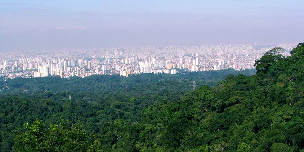 Edital para plantio de 1 milhão de mudas no Cantareira é prorrogado