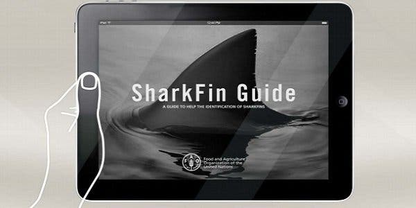 iSharkFin: o software da FAO que salva os tubarões