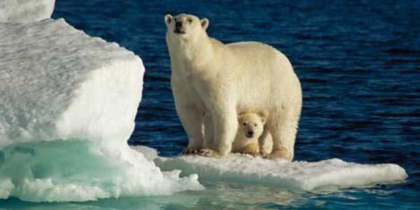 dia internacional do urso polar