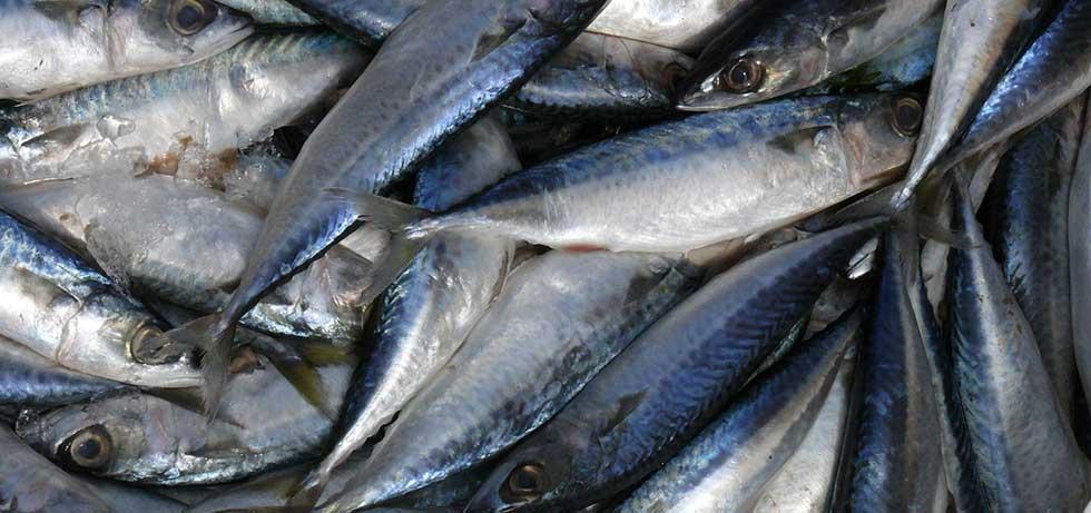 Petrobras anuncia produção de biodiesel feito de óleo de peixe