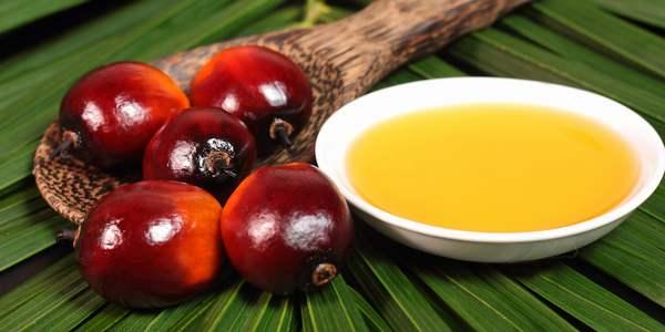 um substituto ecológico de Óleo de palma salva as florestas