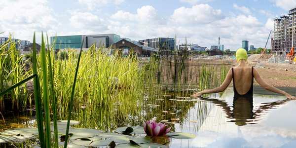 piscina plantas purificar água