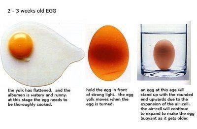 Reconhecer ovo velho