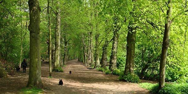 árvores para o conforto