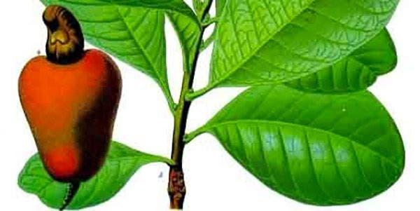 biodiversidade plantas