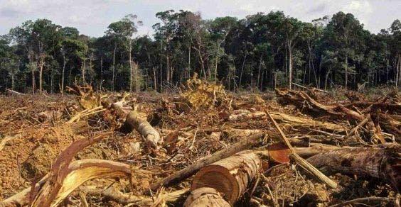 florestas-desmatadas