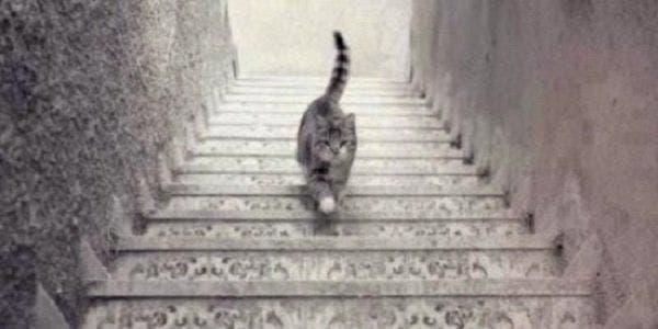 gato sobe desce