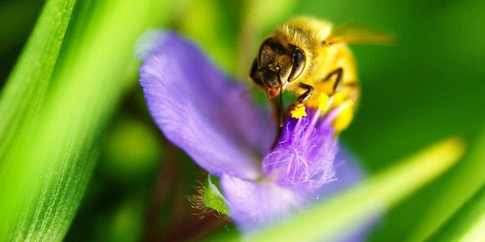 biodiversidade poliniadores