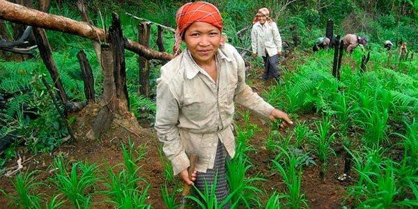 fome agricultura agroforestal