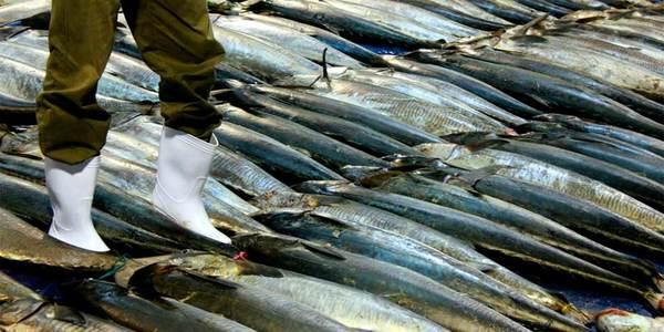 consumo consciente de peixe