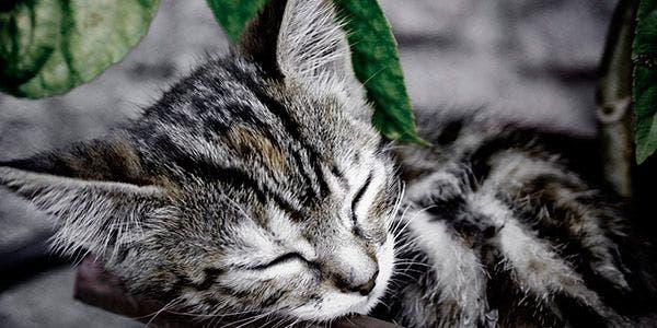 violencia contra caes e gatos